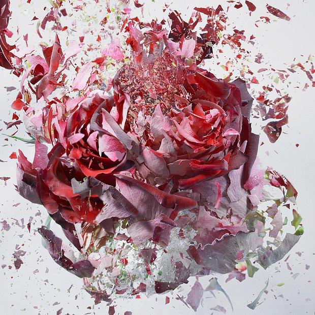 explodingflowers8.jpg